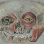 Teschio, anamorfosi, 2002