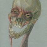 Muscoli pellicciai, 2002