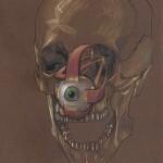 Muscoli dell'occhio, 2002